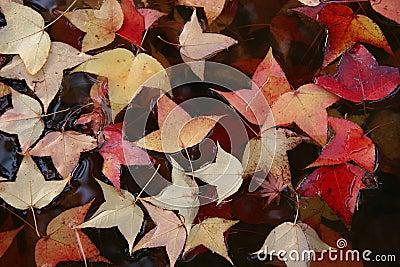 Leaves in water.
