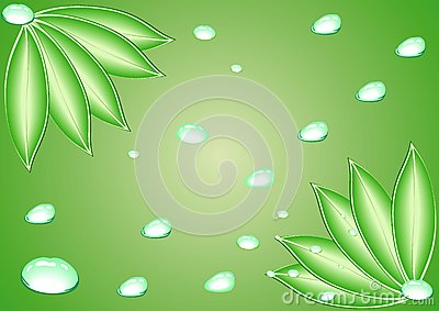Leaves with water drops. Vector.