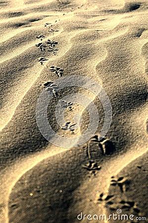 Bird steps on fine sand