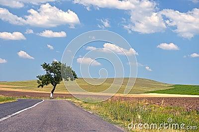 Lege plattelandsweg