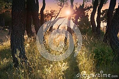 Legno incantato - indicatore luminoso di sera