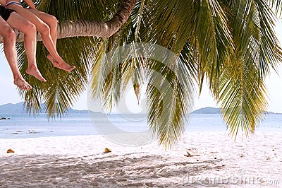 Legs of couple sitting on palm tree on a paradise island
