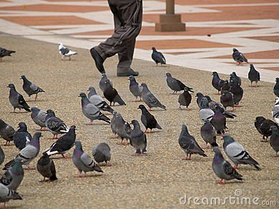 Legs Walking Through Pigeons