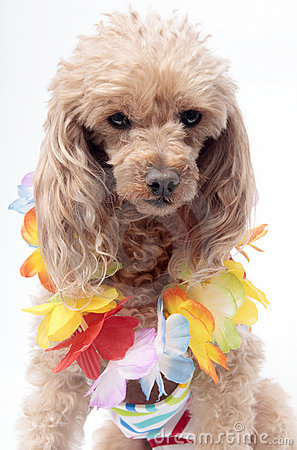 Lei On Dog