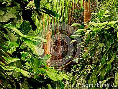Leid Jungle