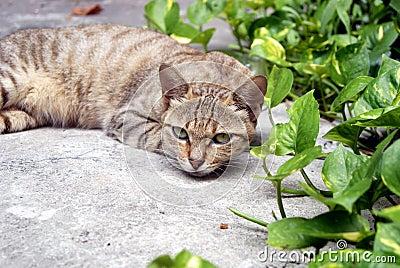Leisure cat