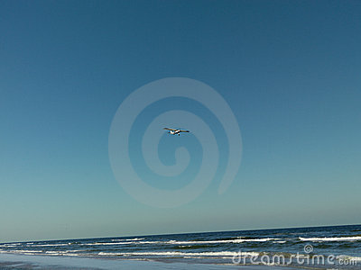 Leisure white plane flying over sea shore