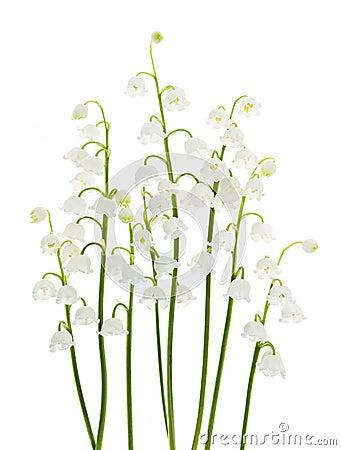 Lelietje-van-dalenbloemen op wit