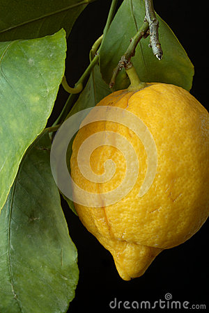 Lemon with leaves.