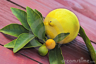 Lemon and other fruits