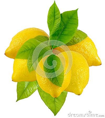 Free Lemons Stock Photos - 24114163