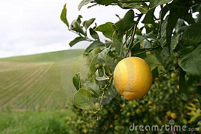 Lemons for ever