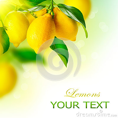 Free Lemons Hanging On A Lemon Tree Royalty Free Stock Photo - 37402235