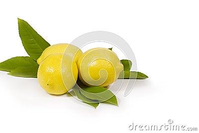 Lemons & Leaves