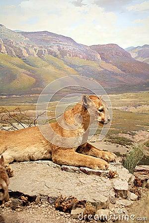 León de montaña