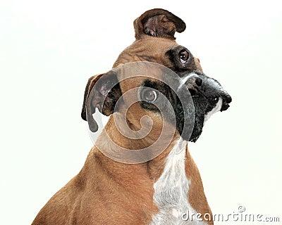 Lenny The Dog