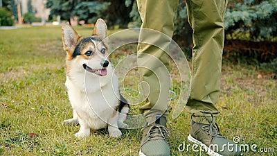Lenteur du mouvement de l'adorable race de corgi chien assise sur l'herbe près des jambes du propriétaire mâle clips vidéos