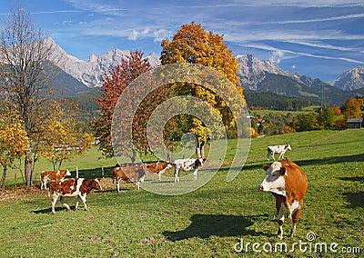 Leogang Valley,SalzburgerLand,Austria