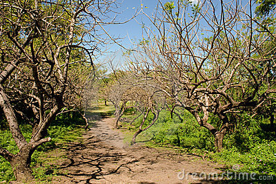 Leon Viejo scenic Nicaragua