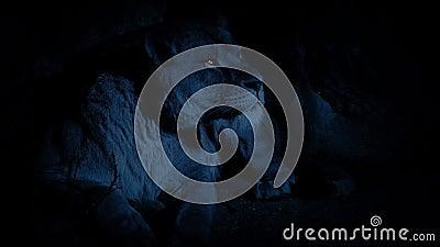 Leona en los ojos de Den At Night With Glowing almacen de video