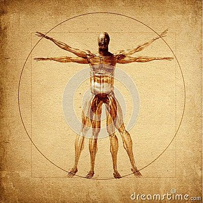 Leonardo s Vitruvian Man