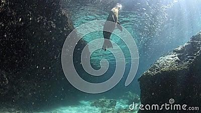 Leone marino che gioca con il underwater del ciottolo archivi video