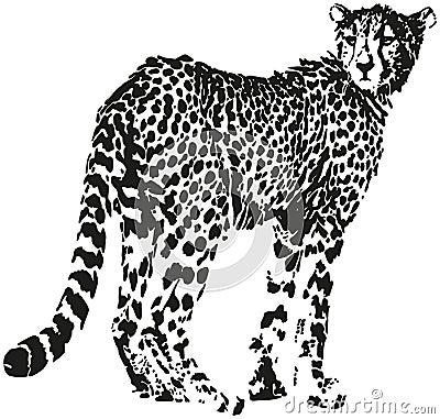 leopard vektor abbildung bild 40342563. Black Bedroom Furniture Sets. Home Design Ideas