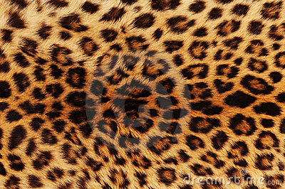 Leopard Background on Leopard Background  Click Image To Zoom