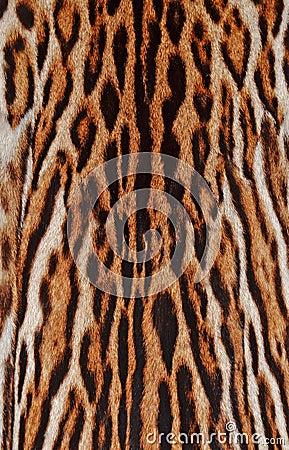 Leopard fur details