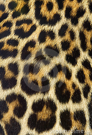 Free Leopard Fur Texture Stock Photos - 9604043