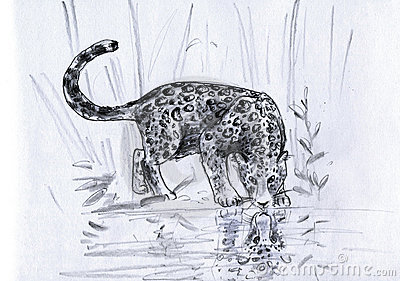 Leopard s reflection