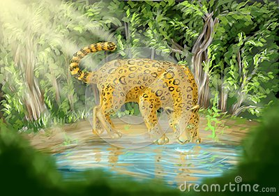 Leopardo que bebe de piscina