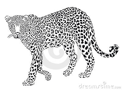 Leopart black on white