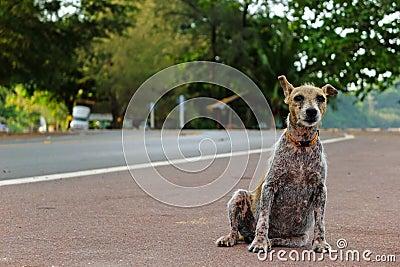 Leper dog