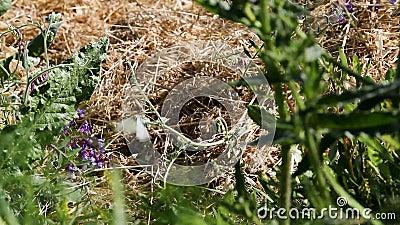 Lepidottero bianco che si siede sul gambo verde che prende volo archivi video