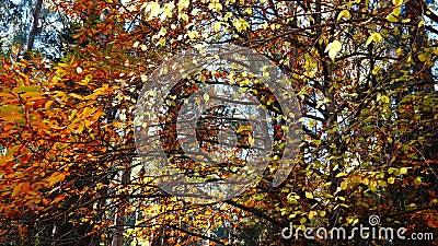 Les arbres aux couleurs d'automne glorieuses banque de vidéos