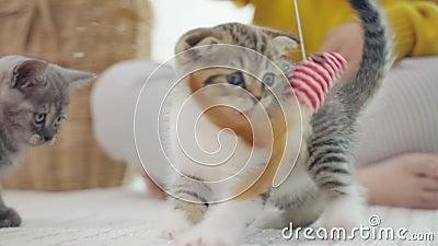 Les chatons de Cute jouent avec le jouet de chat au ralenti banque de vidéos