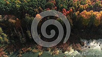 Les couleurs d'automne le paysage forestier d'en haut banque de vidéos
