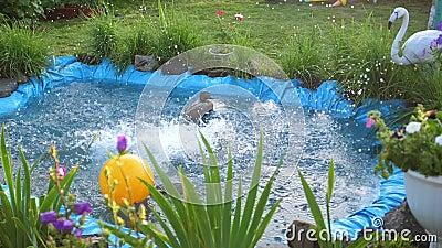 Les Enfants Nagent Dans Un Petit Lac Un Jour Chaud D Ete Jardin