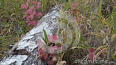 Les feuilles d'automne dans la forêt et les insectes volent clips vidéos
