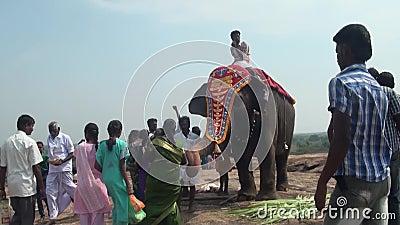Les gens ont rappelé sur le marché local près de l'éléphant clips vidéos