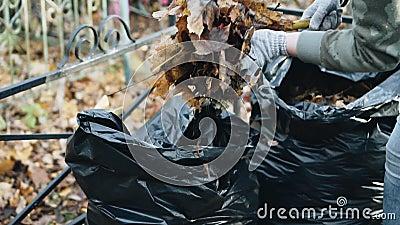 Les mains des filles et les râteaux de râteau feuilles jaunes du sol Sacs à ordures banque de vidéos