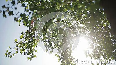 Les rayons du soleil clips vidéos
