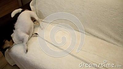 Les secousses de chien Crabot secouant outre de l'eau clips vidéos