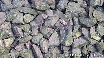 Les têtards mangent des algues sur des pierres dans l'eau Un têtard défèque tout en mangeant des algues banque de vidéos