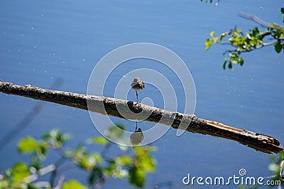 Lesser Greater Yellow Legs Bird