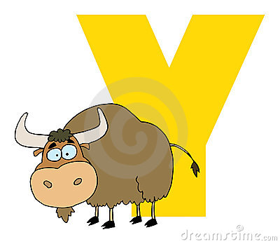 Letter y with a yak