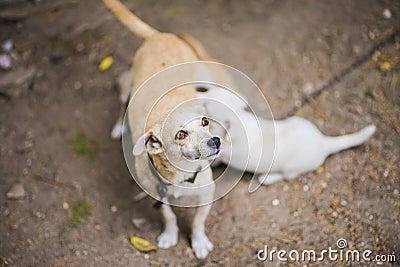 Lettle dog nursing puppy