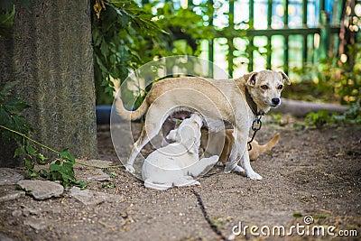 Little dog nursing puppy