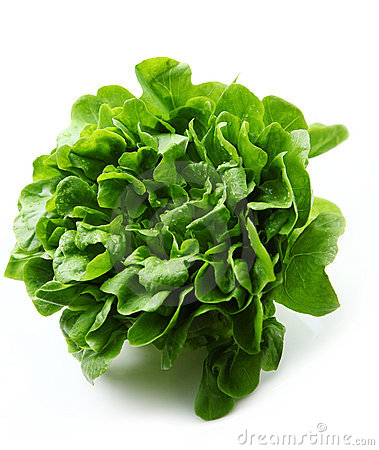 Free Lettuce Royalty Free Stock Photos - 10312188